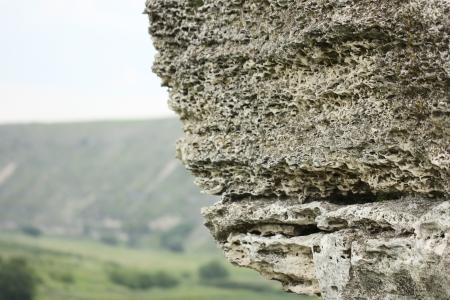 coquina: Coquina de roca de cerca sobre un fondo de naturaleza