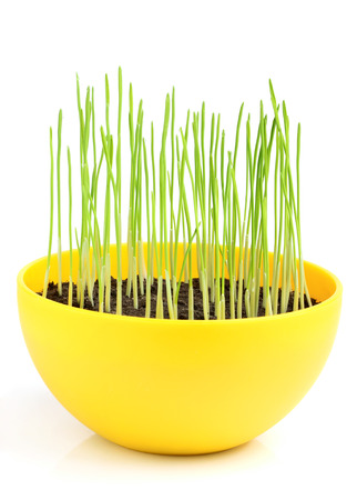 Wheat germ in a yellow pot isolated on white background. photo