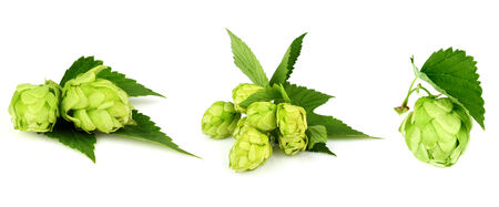 spice isolated: The collage green hop isolated on white background. Stock Photo