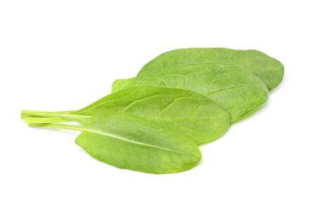 Sorrel leaves isolated on white background. Stock Photo