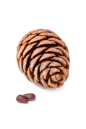 Cedar cone with nuts isolated on white background.