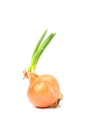 Spring onion isolated on white background. Stock Photo