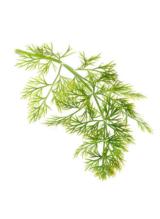 Branch of fresh dill isolated on white background.