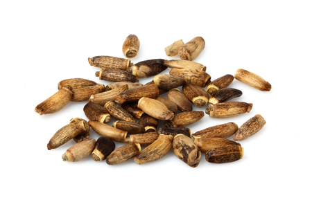 Seeds of a Milk Thistle (Silybum marianum,Scotch Thistle,Marian Thistle).