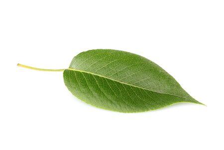 Fresh green cherry leaf close up.