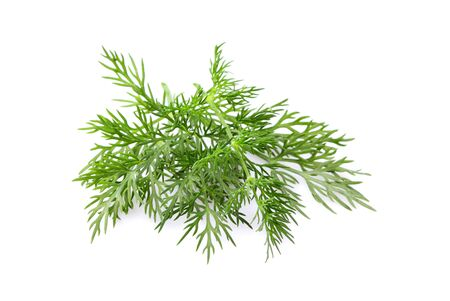 Fresh dill isolated close-up on white background.