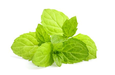 Fresh mint, melissa plant closeup isolated on white background.