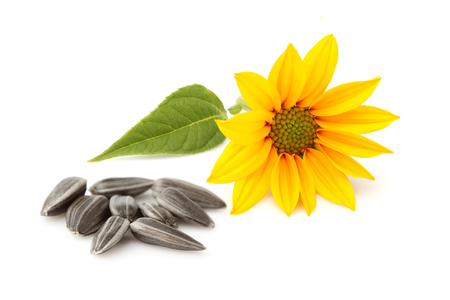 Fresh sunflower and sunflower seeds isolated on white background.