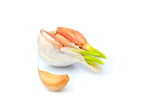 Fresh garlic sprouted isolated on white background.