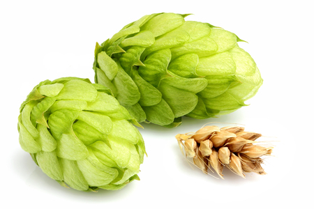 Fresh hops with ears of barley.Closeup on white background. Stock Photo