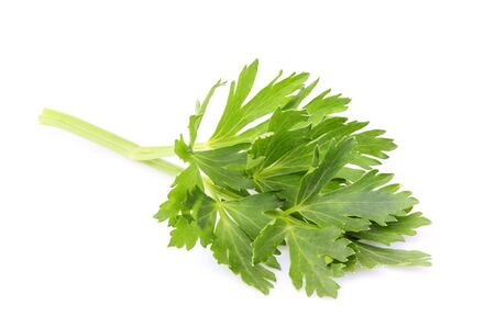 Fresh herbs spices. Celery leaves isolated closeup on white background.  Stock Photo