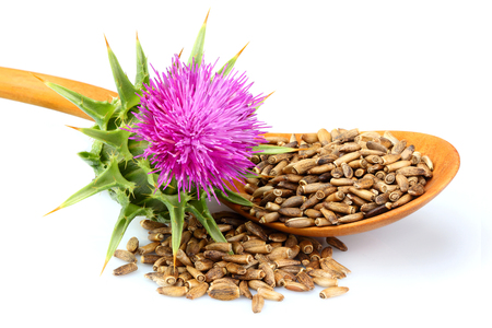 Seeds of a milk thistle with flowers (Silybum marianum, Scotch Thistle, Marian thistle ) in a wooden spoon.Isolated on white closeup.