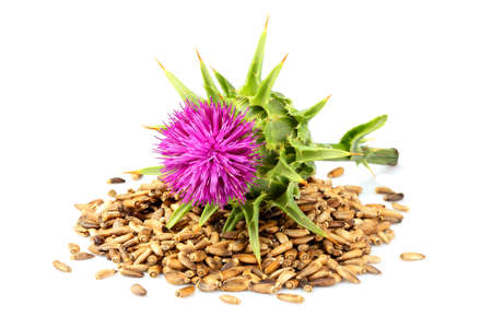 Seeds of a milk thistle with flowers (Silybum marianum, Scotch Thistle, Marian thistle ) Isolated on white closeup. Stock Photo