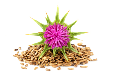 Seeds of a milk thistle with flowers (Silybum marianum, Scotch Thistle, Marian thistle ) Isolated on white closeup. Stockfoto
