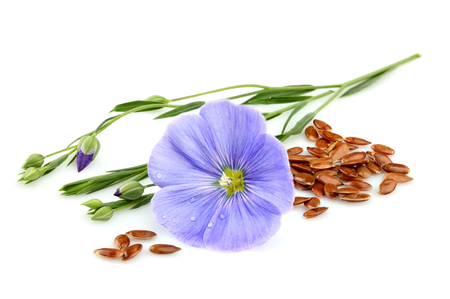 Flax seeds with flowers closeup on white background.
