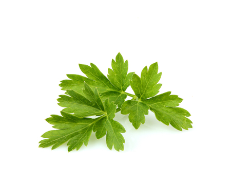 Parsley leaves close-up isolated on white background.