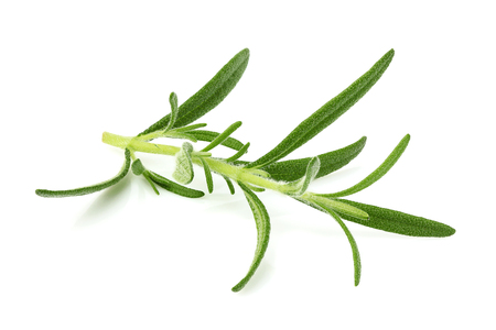 Closeup sprig of rosemary isolated on white background.