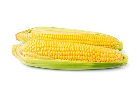 Dos mazorcas de maíz aisladas sobre fondo blanco.