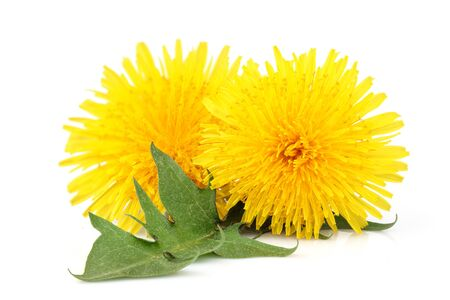Dandelions flower and dandelions leaf isolated on white background.