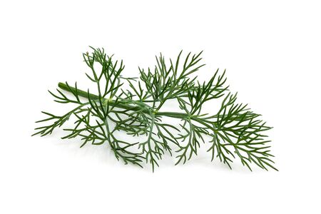 Fresh dill isolated close up on white background. Stock Photo