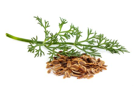 Fresh dill with seeds of fennel isolated on white background.