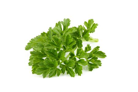 Fresh branch of parsley close up on white background.