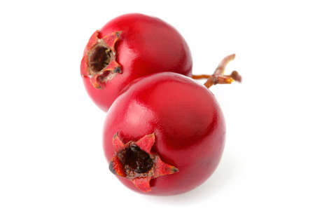 Red hawthorn berries close-up. Isolated on a white background. Medicinal berries. Stock Photo