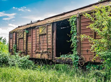captured: Old railway wagon derelict captured by vegetation.