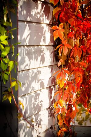 autumn floral colorful background in garden Stock Photo