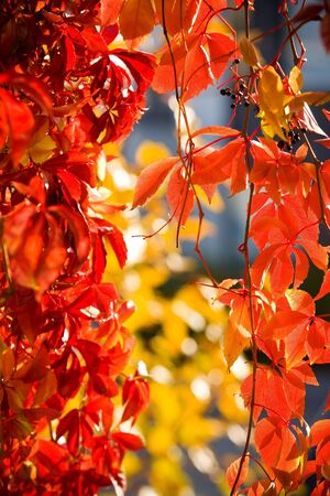 autumn floral colorful background in garden photo