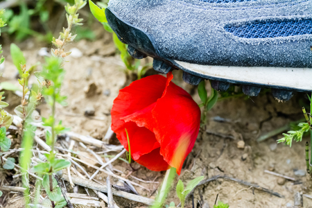 trampled: A shoe of a man who tramples a poppy flower Stock Photo