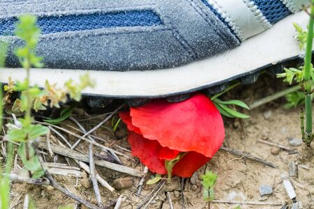 trampled: A shoe of a man destroy a poppy flower Stock Photo