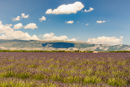 Landscape of a lavander field with a building and mountains, in background Stock Photo