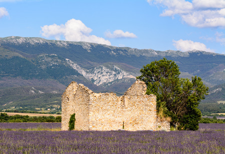 lavander: An abandoned house, in  a lavander field, near Valensole in Provence Stock Photo