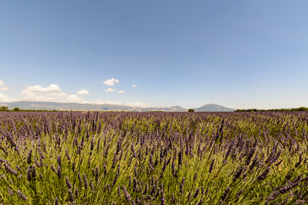 lavande: Landscape of a lavander field with a building and mountains, in background Stock Photo