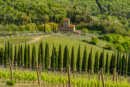 wine road: RADDA IN CHIANTI, ITALY - APRIL 17, 2017 - View of the countryside near the town of Radda with a vineyard and a villa.