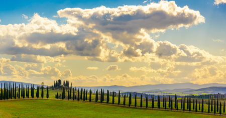Tuscany countryside near Asciano in Italy with cypress trees in a row