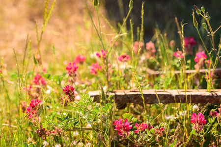 Purple wildflowers in foreground with a rusty iron bar in background