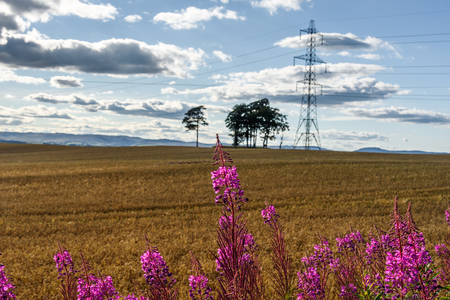 highlands region: Scenic view of the countryside near Perth in Scotland in summer with purple wildflowers in foreground.