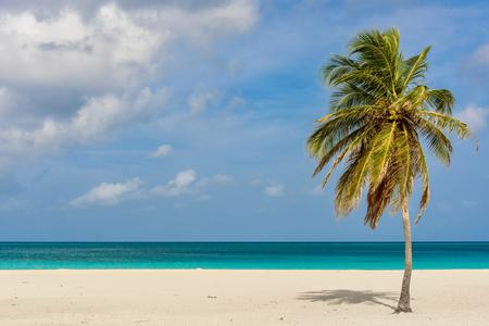Palm tree on the idyllic white sand of Eagle Beach in Aruba. Caribbean seascape.