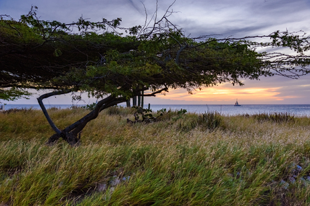 Scenic landscape of Aruba near Boca Catalina beach at sunset with a Divi Tree in foreground