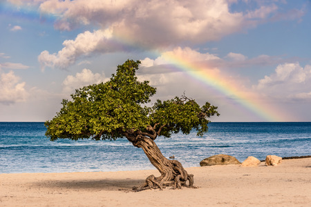 View of a caribbean beach with a tree and a rainbow. Stock Photo