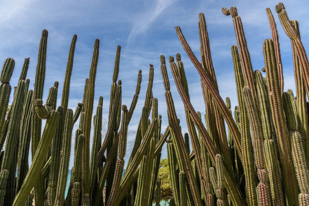 View of the arid nature of Aruba with cactus against blue sky