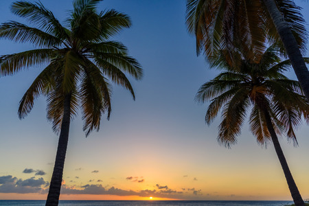 Silhouette of palm trees at sunset. Tropical background.