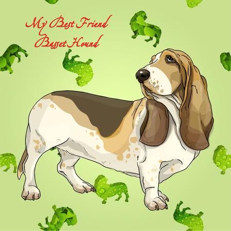 pampered: Basset hound dog on the forest puppy texture