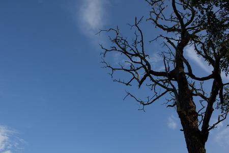 arboles secos: Trees, dead trees