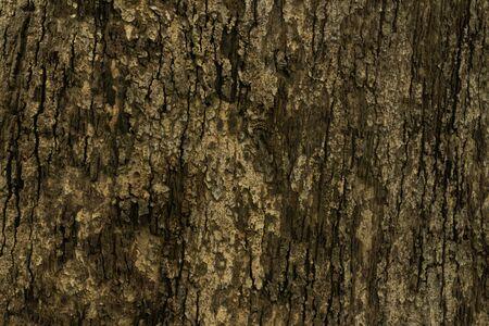 Teak wood bark.