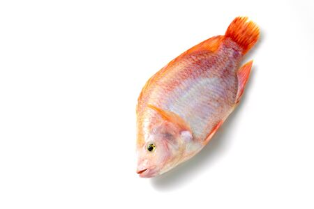 Ruby fish on a white background. Stock Photo