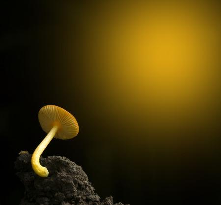 Orange mushrooms on black clod.