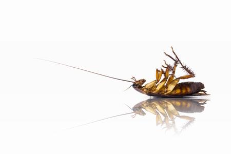Cockroaches die upside down. Foto de archivo
